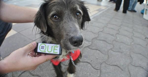 Castración de mascotas: el cronograma completo para el mes de junio