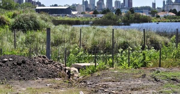 """""""La Reserva del Puerto necesita un plan de manejo urgente"""""""