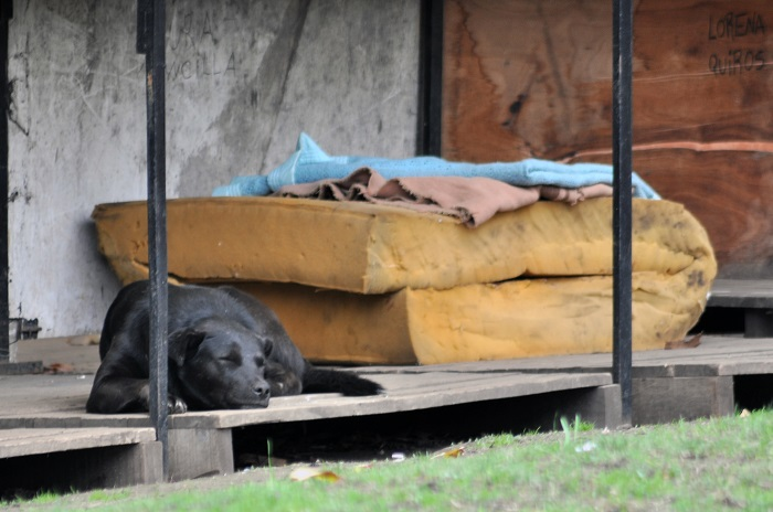 Muerte en la calle: el FpV le pide informes al Ejecutivo
