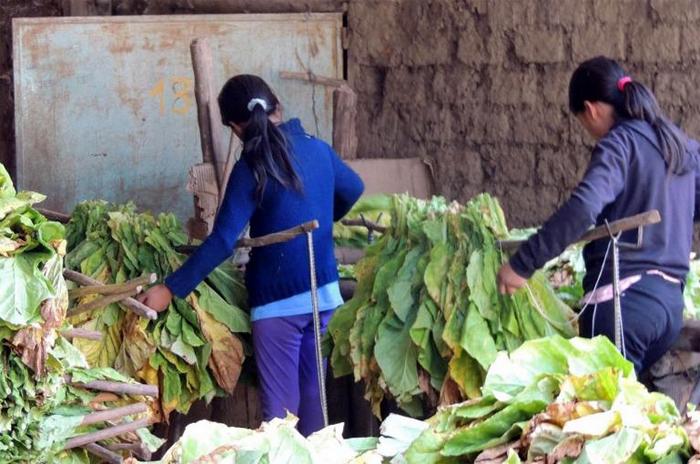 Trabajo infantil: cordón frutihortícola y puerto, los más afectados