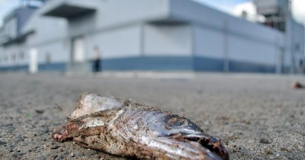 Puerto: otro reclamo, otras indemnizaciones