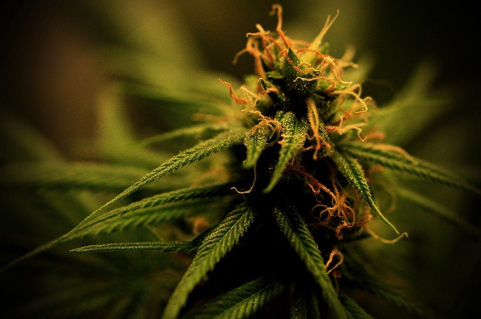 Realizarán una jornada sobre cannabis medicinal en el HCD
