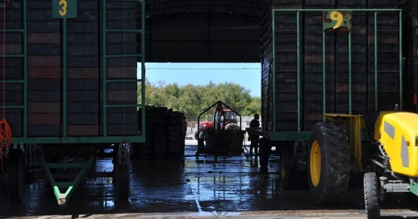 Una nueva investigación contra las harineras portuarias
