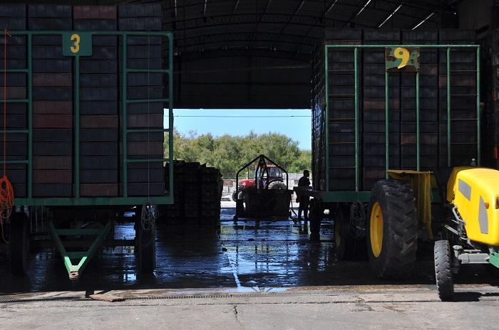 Se acumulan denuncias contra las harineras portuarias