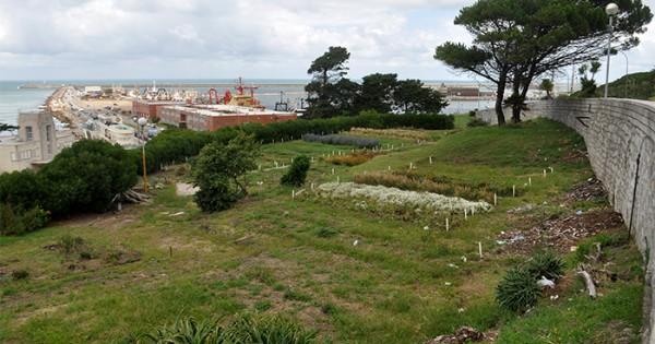 Austeridad el abandono del vivero municipal de playa for Vivero municipal