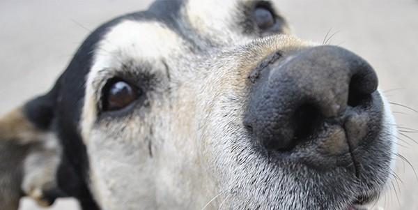 Vacunación antirrábica: dónde y cuándo vacunar a perros y gatos