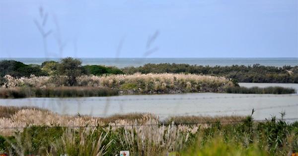 """Reserva del Puerto: """"El gobierno no tiene ningún interés"""""""