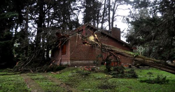 El temporal azotó el bosque Peralta Ramos