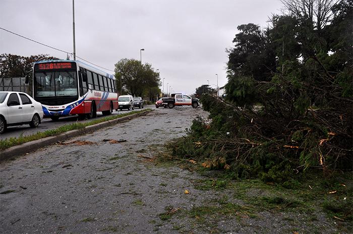 Árboles caídos, barrios sin luz ni agua y una familia evacuada