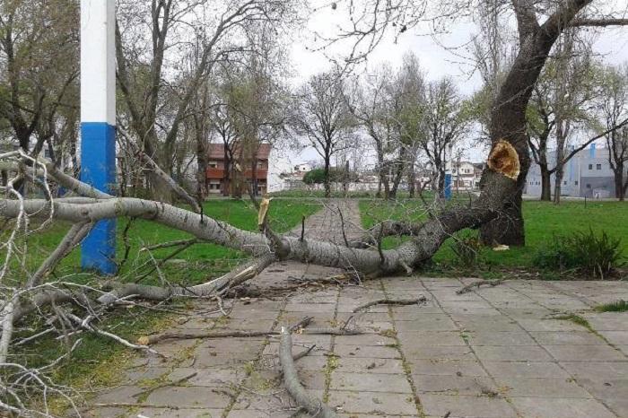 Emder: cayeron árboles, placas, chapas y cerró el natatorio