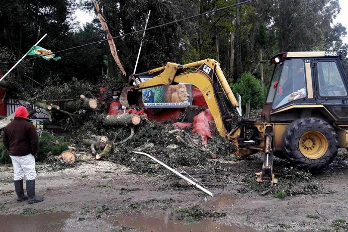 Sierras: unos 100 árboles caídos, calles cortadas y zonas sin luz