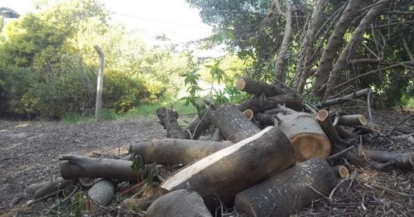 Denuncia penal contra Horizonte por la tala de árboles en el sur