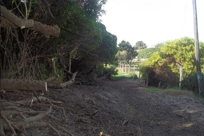 Deforestacion arboles Reserva Forestal Sur1