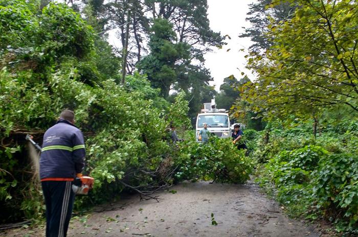 Por el fuerte viento, hubo 35 reclamos por árboles y ramas