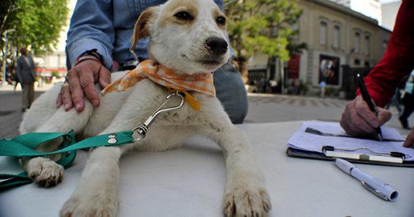 Querían cobrar $400 por la esterilización gratuita de mascotas