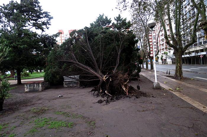 Por el temporal, voladura de techos y árboles caídos