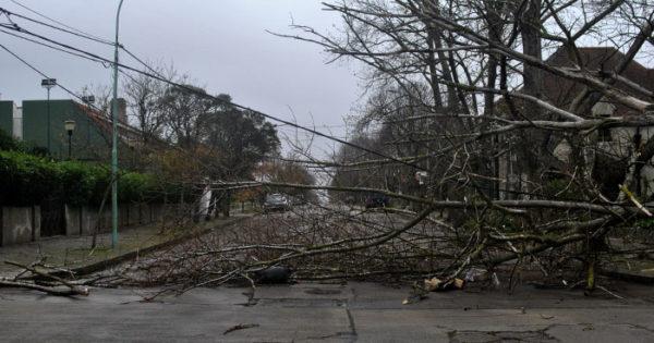 Árboles caídos y barrios sin luz por los fuertes vientos
