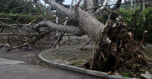 Temporal: sigue el alerta, con fuertes vientos y lluvia