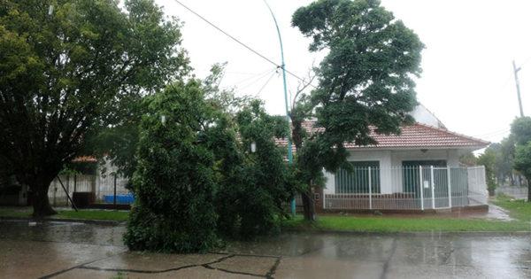 Siete árboles caídos y corte de luz en el barrio Don Emilio