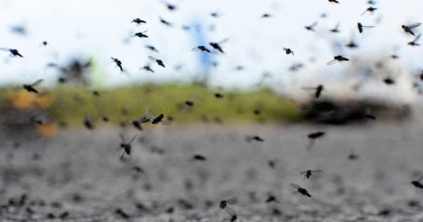 Humedad, calor y mosquitos en Mar del Plata: ¿qué cuidados hay que tener en cuenta?