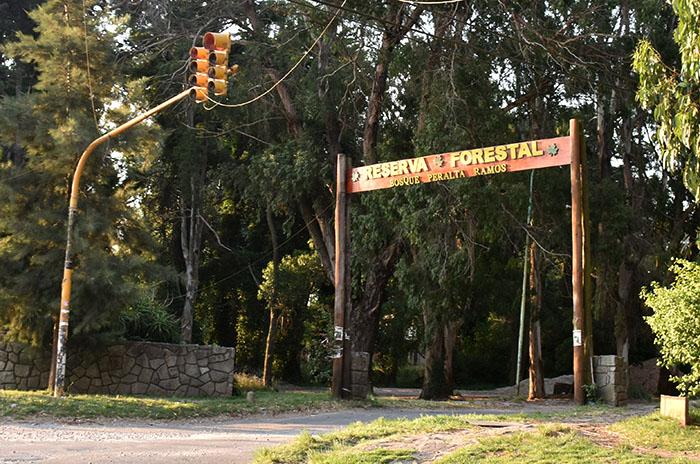 Vecinos denuncian una  tala indiscriminada en el Bosque Peralta Ramos