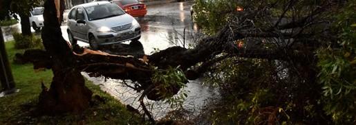 Cayeron más de 10 árboles sobre casas y cables: hay zonas sin luz