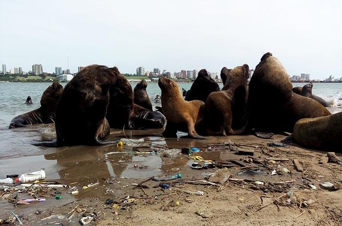 """Reserva de lobos marinos: """"Esta es su casa, no un basurero"""""""