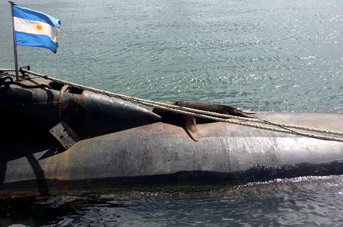 Submarino: el homenaje a Eliana, amante de los lobos marinos