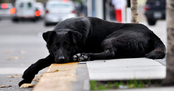En dos meses, el Municipio gestionó la adopción de unos 80 perros