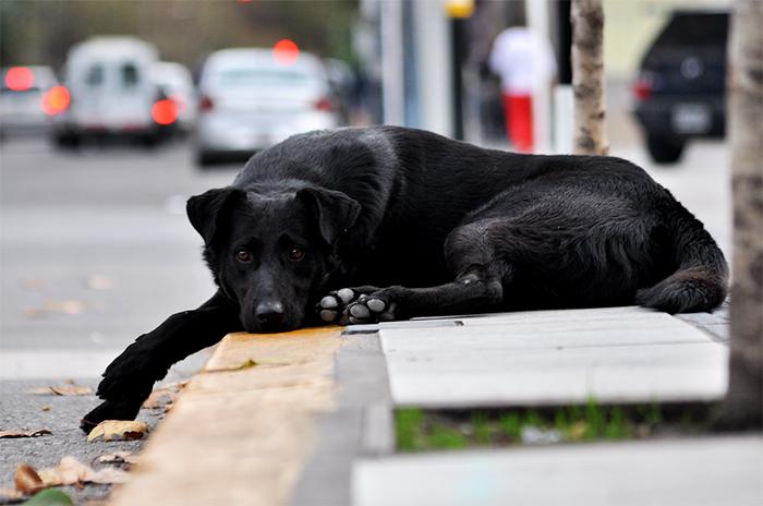 La pirotecnia dejó gran cantidad de perros perdidos y heridos