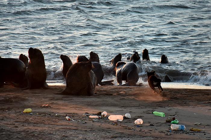 """Reserva de lobos marinos, sin respuestas: """"Nunca vimos algo parecido"""""""