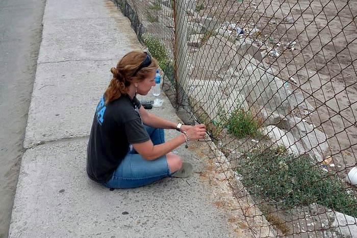Lobos marinos: sin apoyo del Consorcio, el cerco lo arregló Fauna Argentina