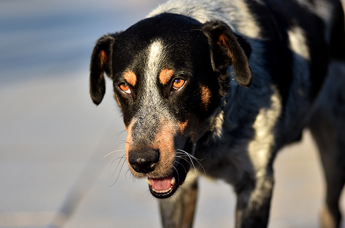 Tenencia de mascotas: una campaña para generar conciencia
