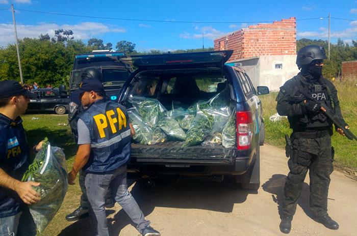 "Desmantelan un ""vivero"" de marihuana: un detenido"