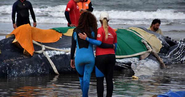 Murió la ballena encallada en Punta Mogotes