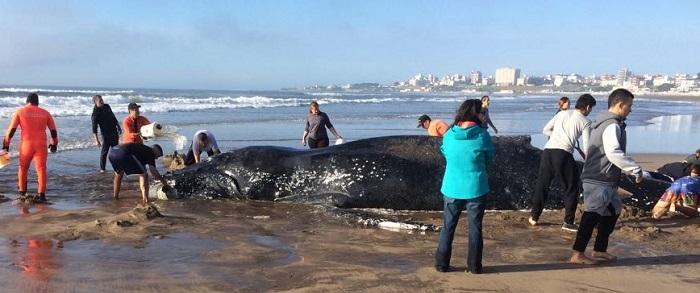 Piden ayuda para poder salvar a una ballena encajada