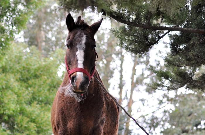 Una nena en grave estado tras ser pateada por un caballo