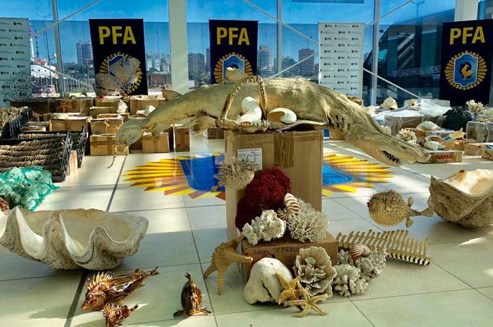 Seis allanamientos y un detenido por venta ilegal de animales marinos