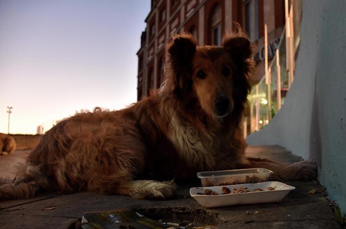Las mascotas y la pirotecnia: cómo cuidarlas para que no sufran