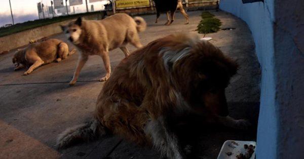 Proponen crear uncementerio de mascotas en Mar del Plata