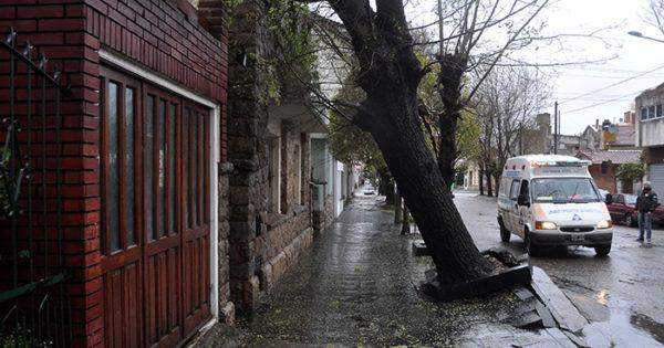 Piden relevamiento para detectar árboles con riesgo de caerse
