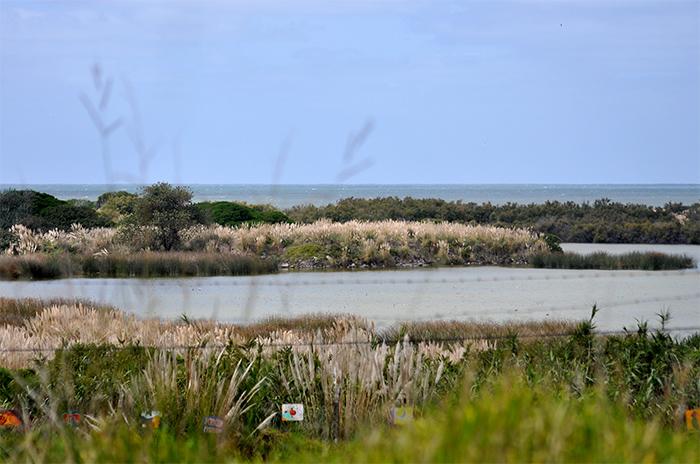 "Según Greenpeace, ""la Provincia cumple"" con la Reserva del Puerto"
