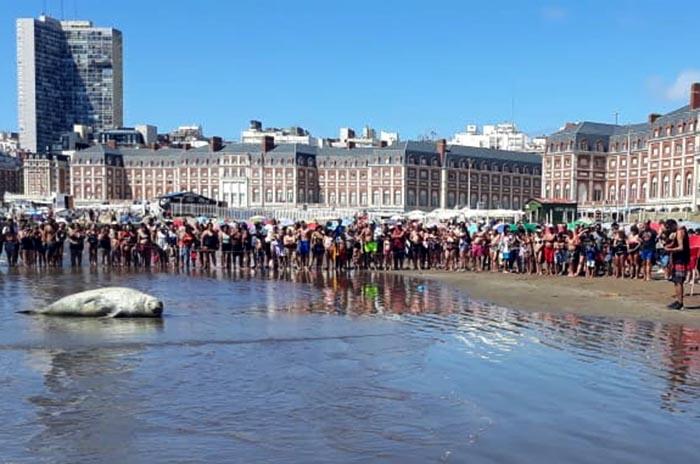 Elefantes marinos en la playa: ¿por qué aparecen?
