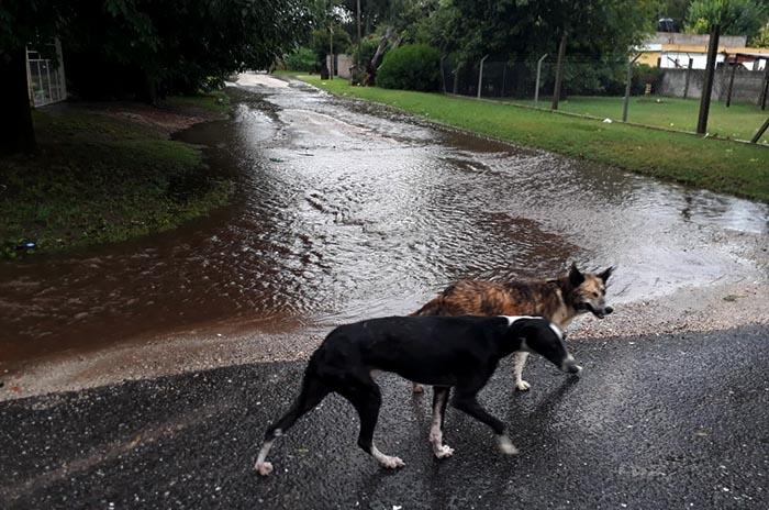 Por la lluvia, calles anegadas y autoevacuados en Parque Hermoso