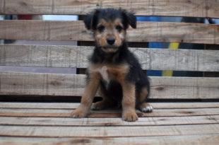 Piden reanudar las castraciones de mascotas en sociedades de fomento