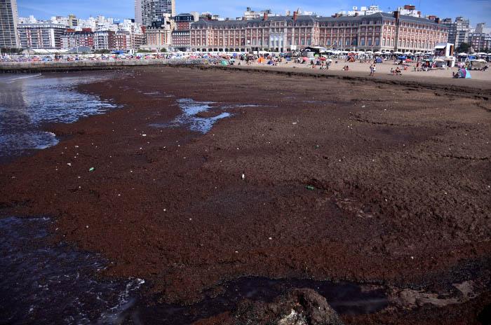 Una invasión de algas cubrió la Playa Popular