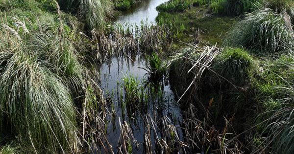 Encontraron un cadáver en el arroyo La Tapera