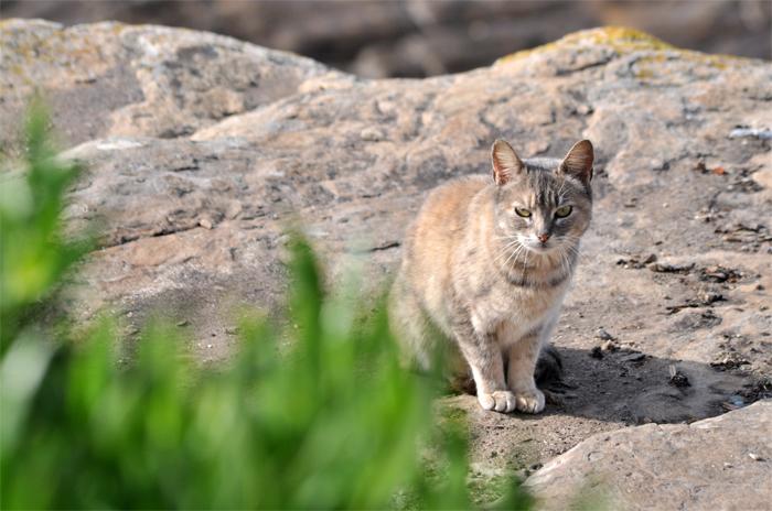 Cabo Corrientes: tras el adiós a Gustavo, ¿qué pasa con sus gatos?