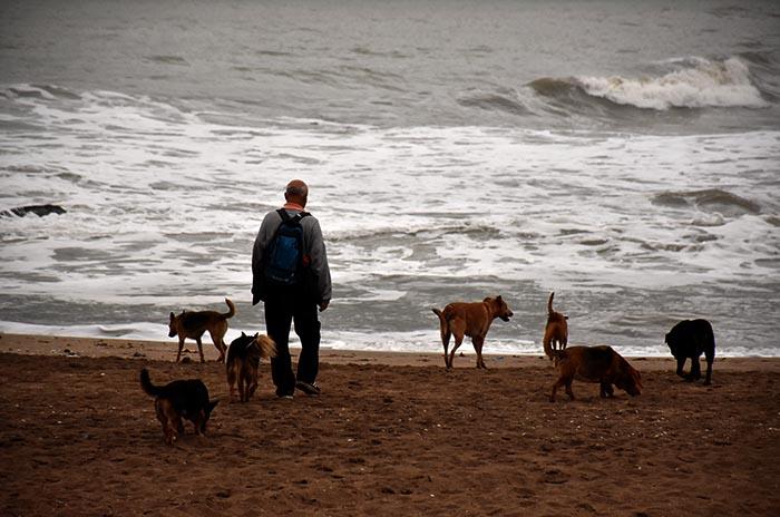 Mordeduras de perros: buscan el cumplimiento de los controles
