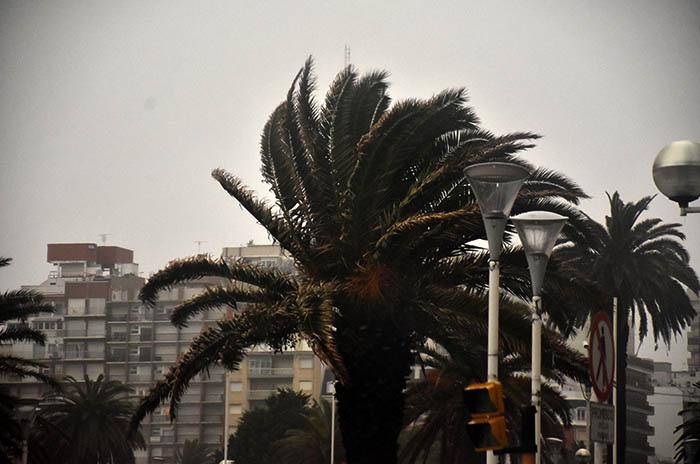 Emiten un alerta meteorológico por vientos fuertes para Mar del Plata